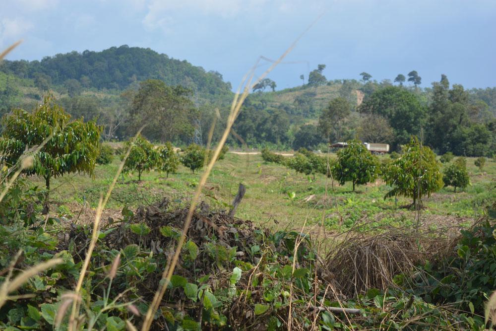 สวนทุเรียนนายทุนใหญ่ที่หวังจะครอบงำธุริจเกษตรของคนไทย
